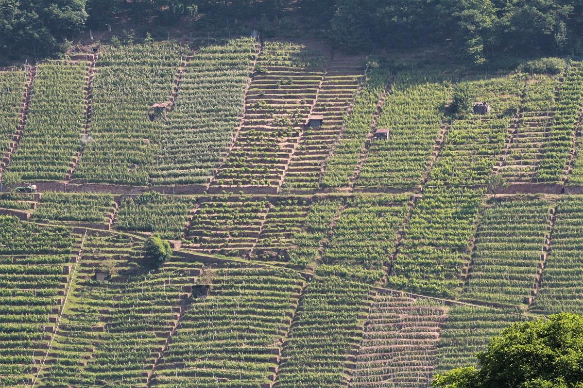 Klingenberger Schlossberg Wein Terrassen