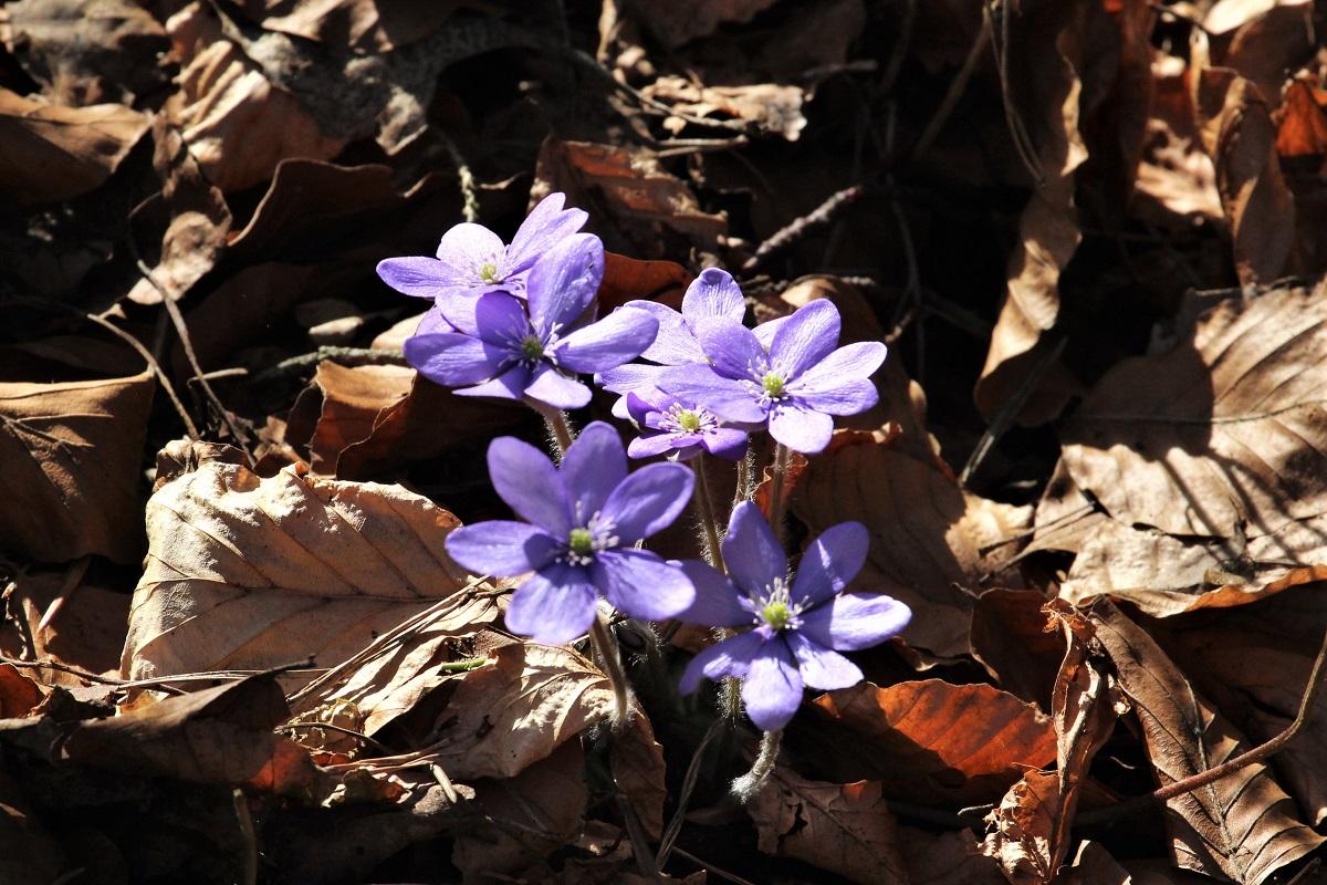 März Blumen
